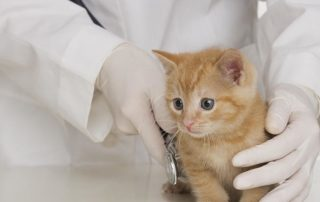 New Kitten Exam and Vaccinations